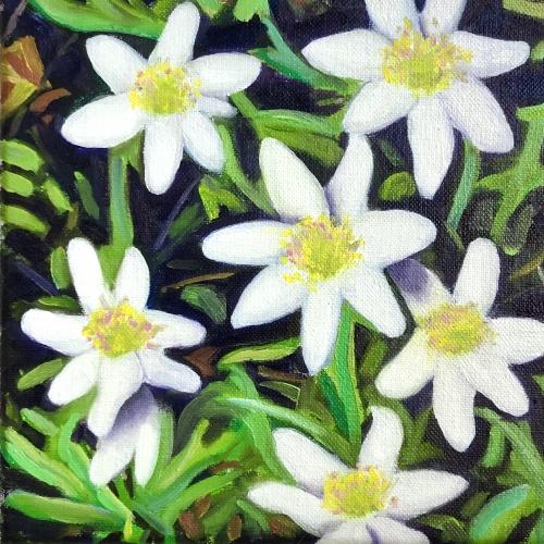 Hvitveis ll/ Springflowers lll
