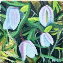 Hvitveis l/  Springflowers ll