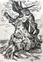 Byrkjeland oak study